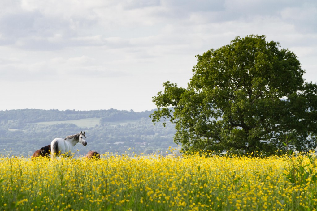 2016 Calendar September - Horses in a Field
